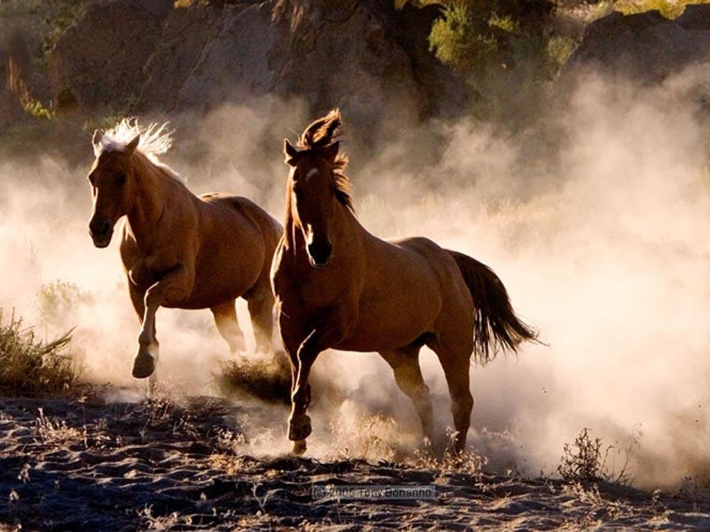 картинки убегаю от коня трюк сообщите том