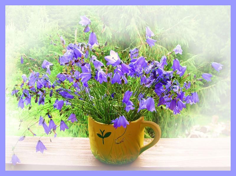 Открытки колокольчики цветы, открытки кошками