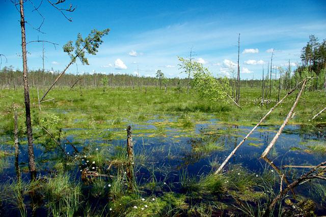 болота
