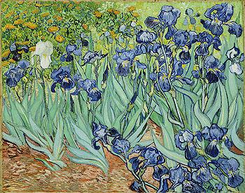 Картина Ван Гога «Ирисы»
