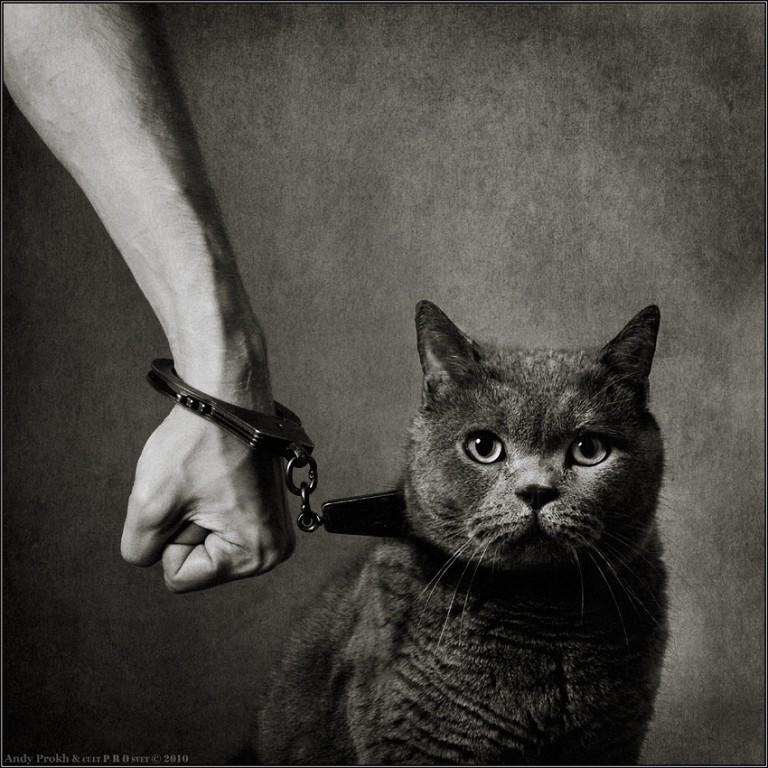 Люди заводят собак, а кошки людей