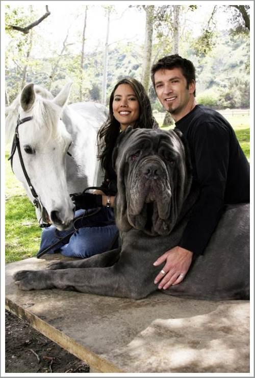 двухкомнатных самая большая собака в россии хутор Ленинский