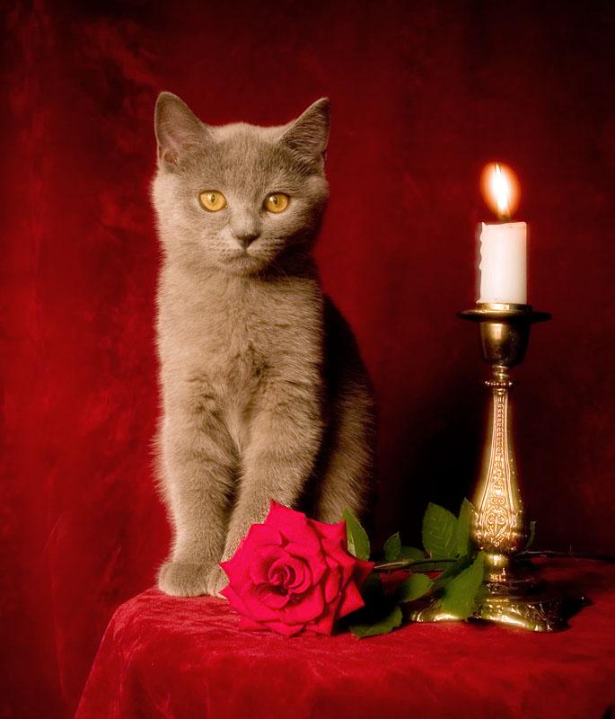 Добрый вечер открытка кошка