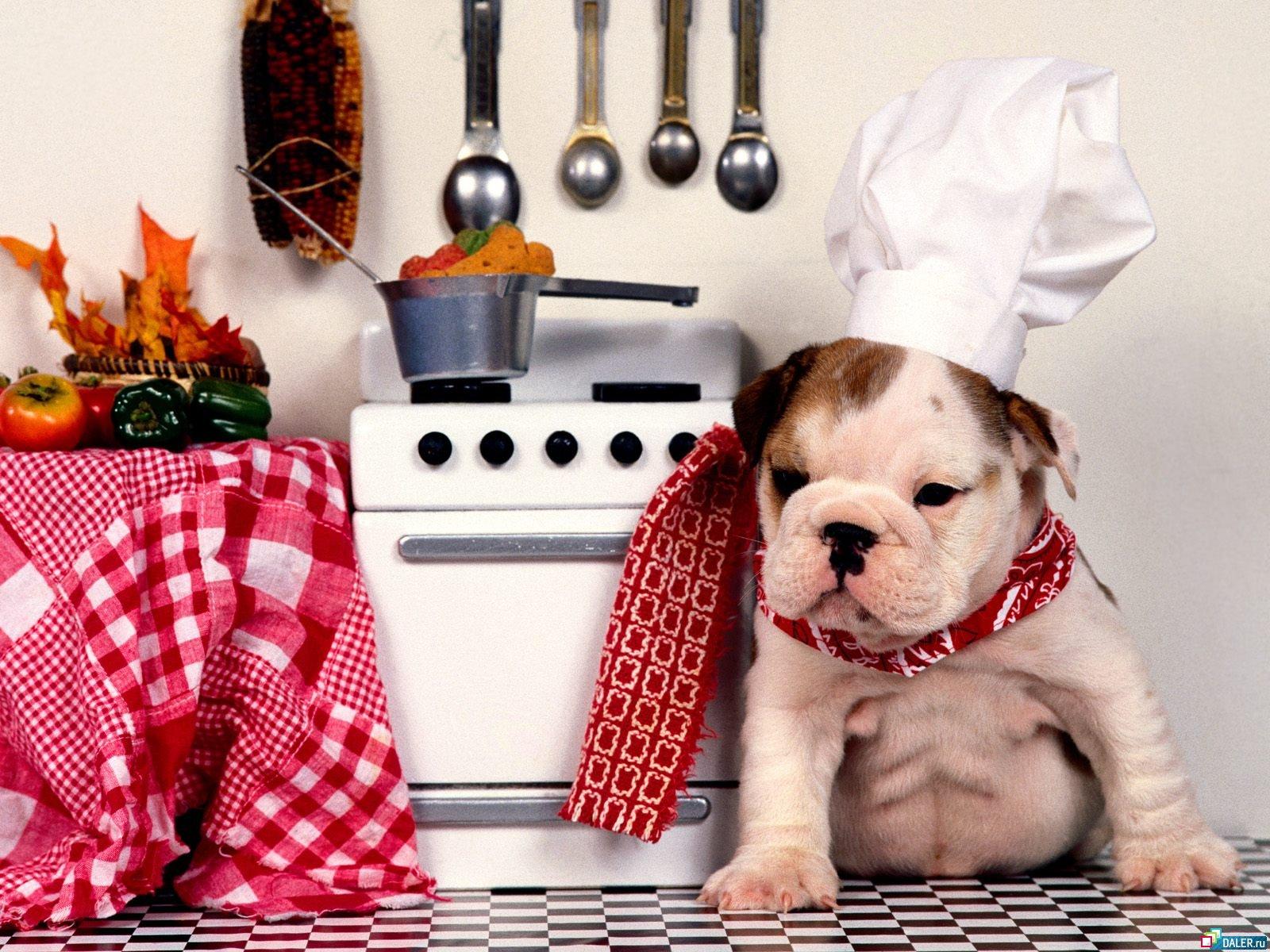 Кухней тоже нужно кому-то заниматься!