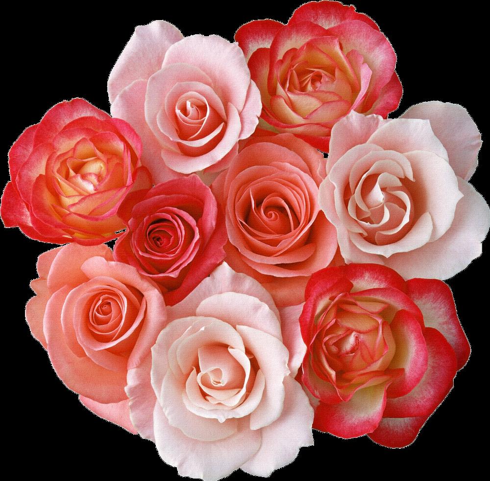 Картинки дашеньке цветы, поздравления днем рождения