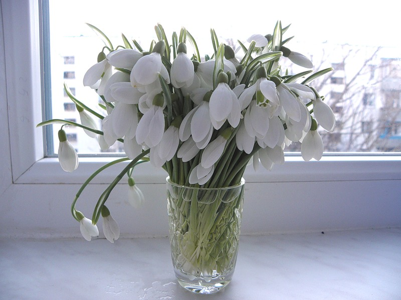 Открытка с днем рождения с тюльпанами и подснежниками, картинки ютубе детская