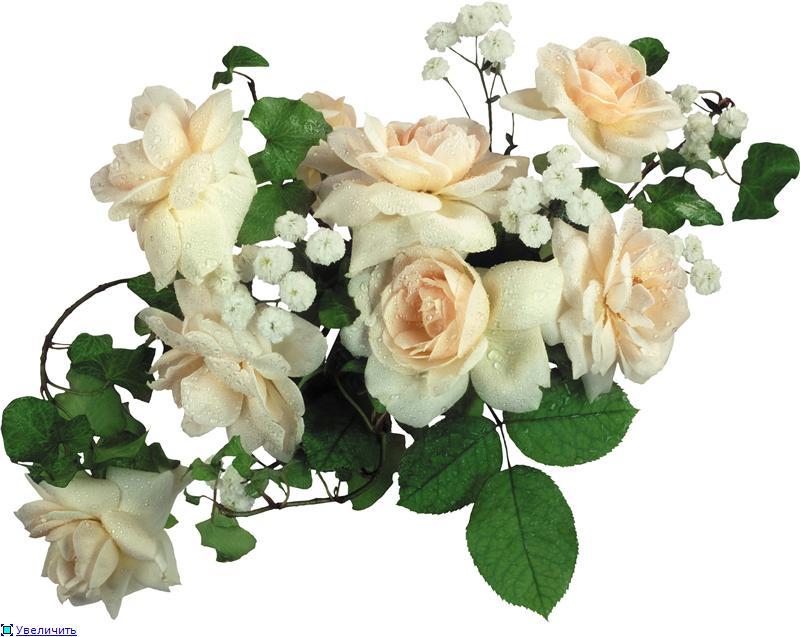 цветы в подарок Танечкам