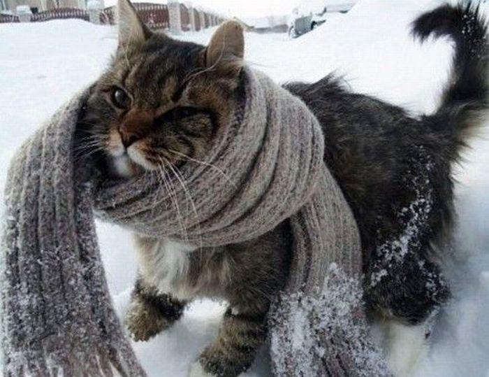 шарф2