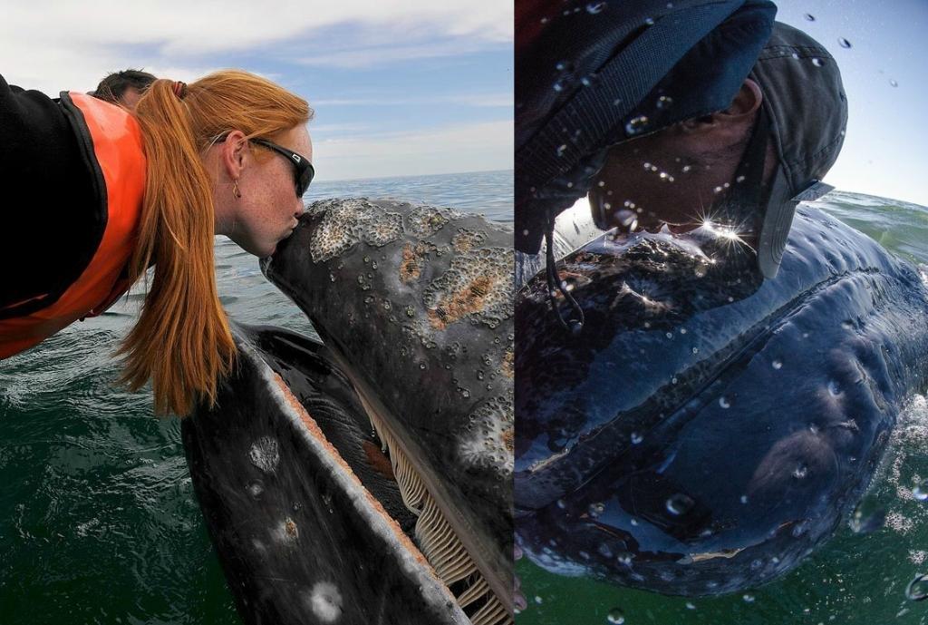 кит под лодкой фото