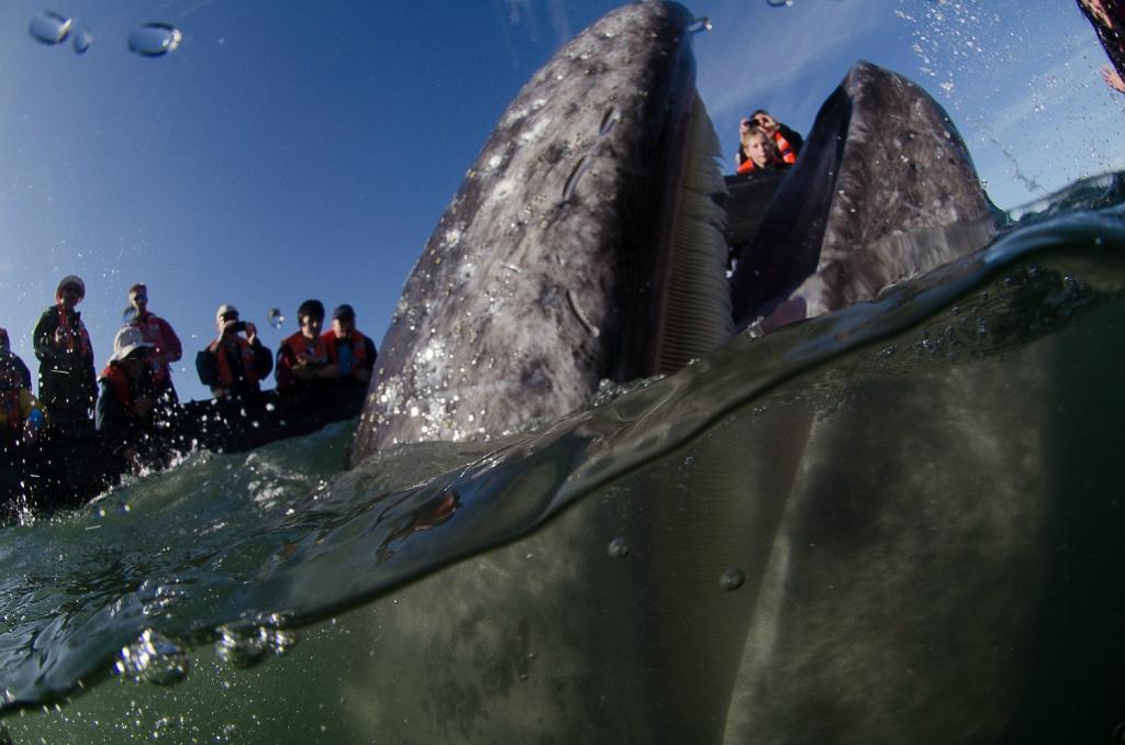 когда кит целует лодку