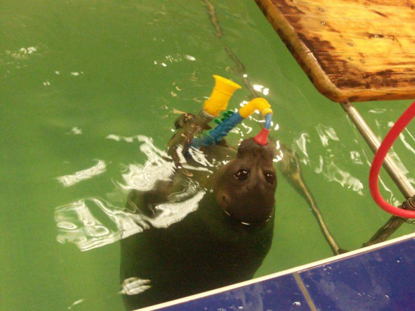 композиция водная экскурсия в листвянке стоимость Инспектор