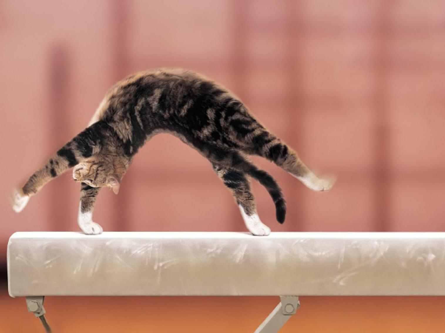 Трюки с котом в домашних условиях