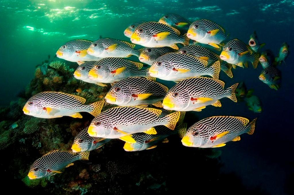 волосы, рыбы австралии фото с названиями германии есть
