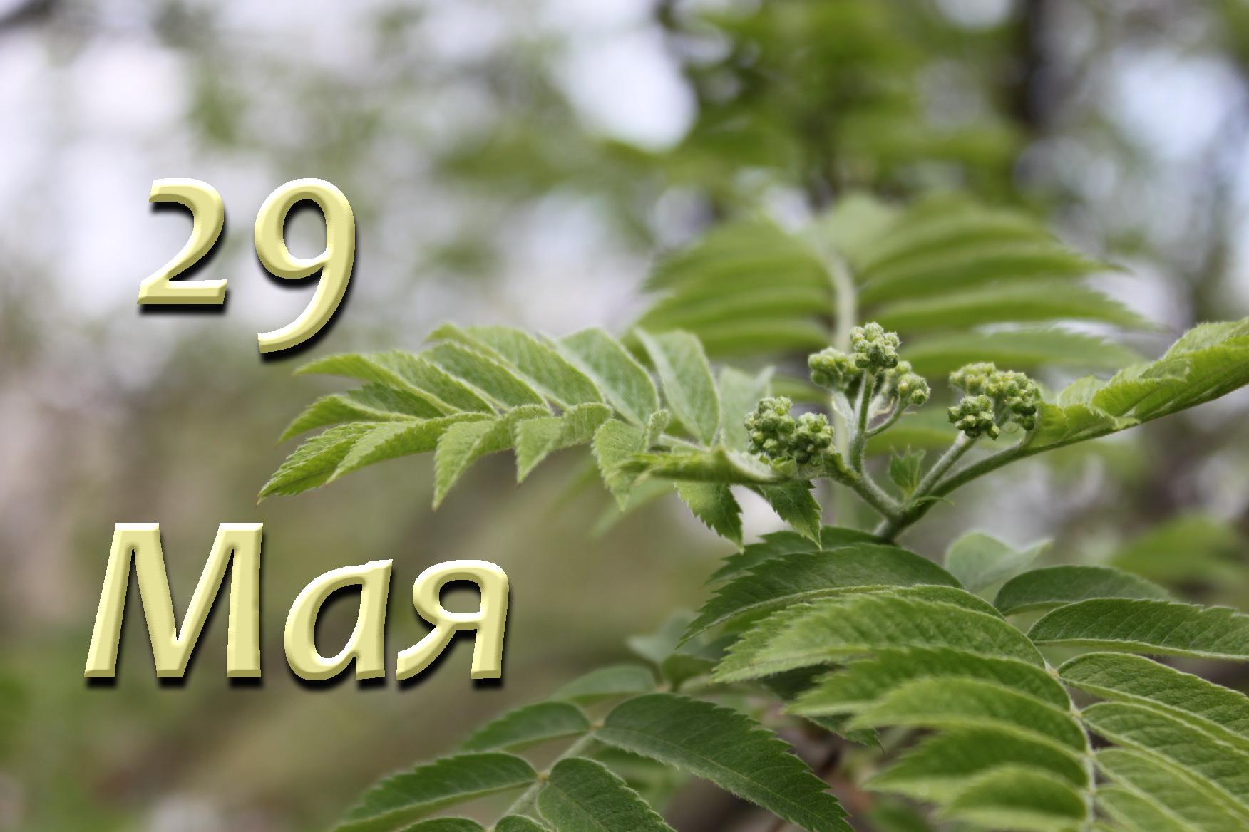 Народные приметы 29 мая 2021 года в день Федора Житника