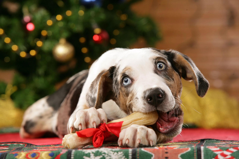 косточка жля желтой собаки