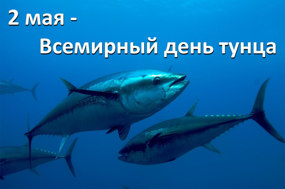 https://tunnel.ru/media/images/2018-05/post/561/tunets-v-sredizemnom-more.jpg