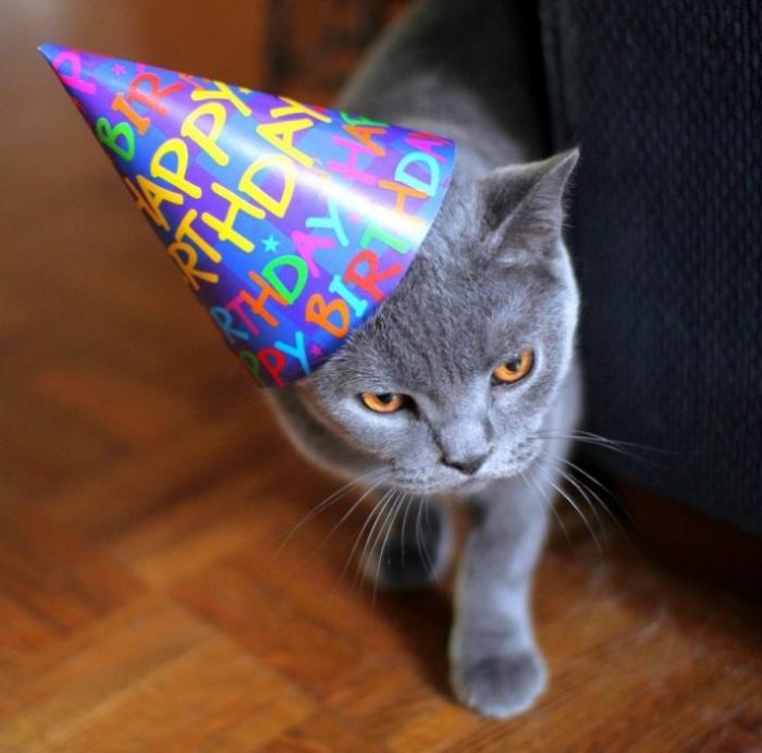 картинки кошачье день рождение вариант первый фотоаппарат