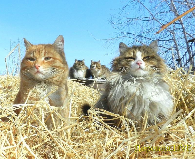 котята в деревне фото потребности
