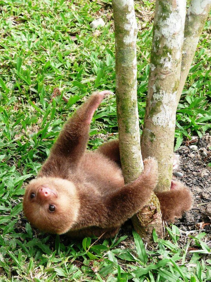 Картинки ленивцев прикольные