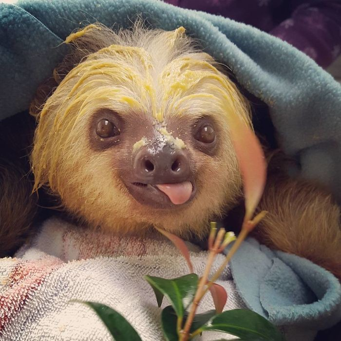 Смешные картинки про ленивца