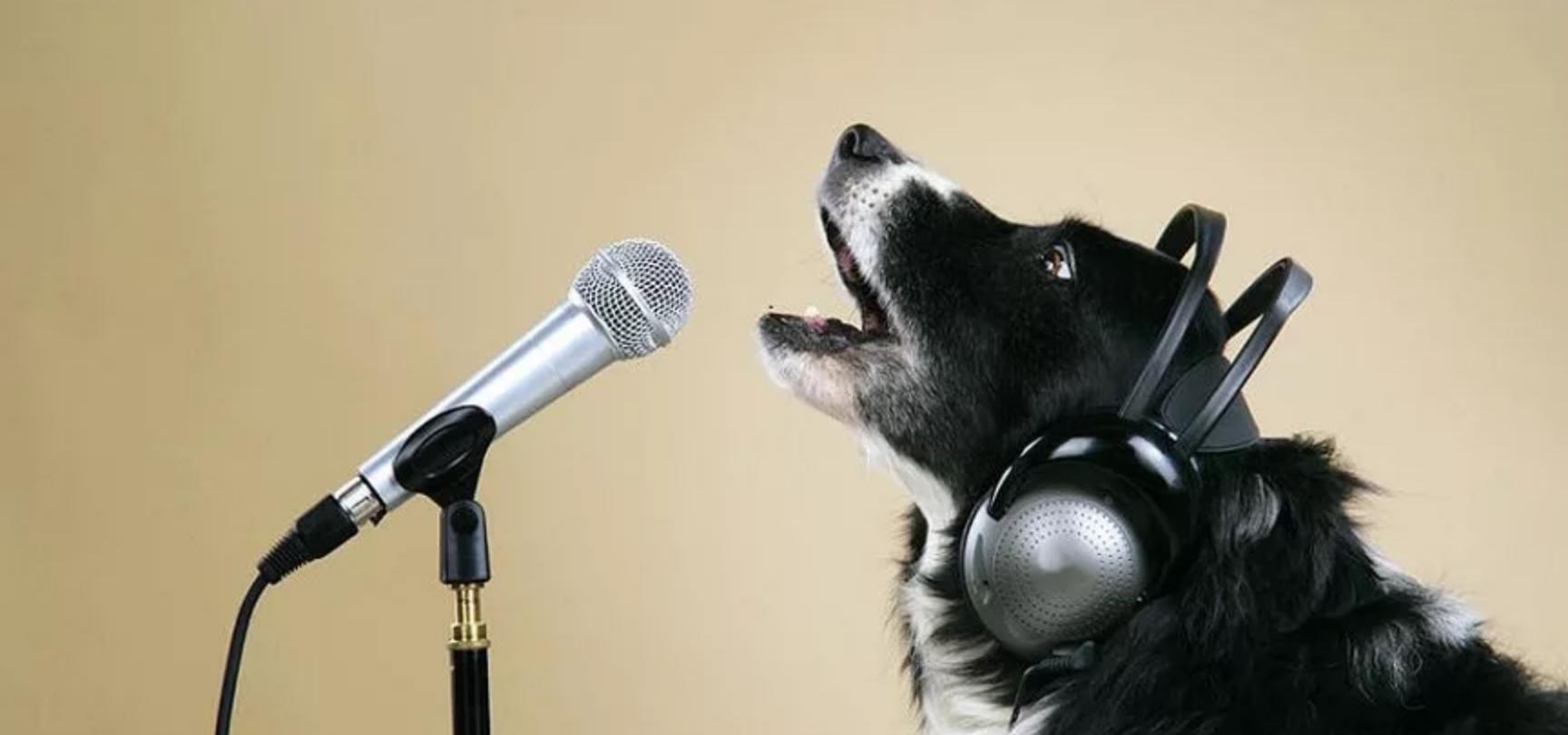 Картинка поющие собаки