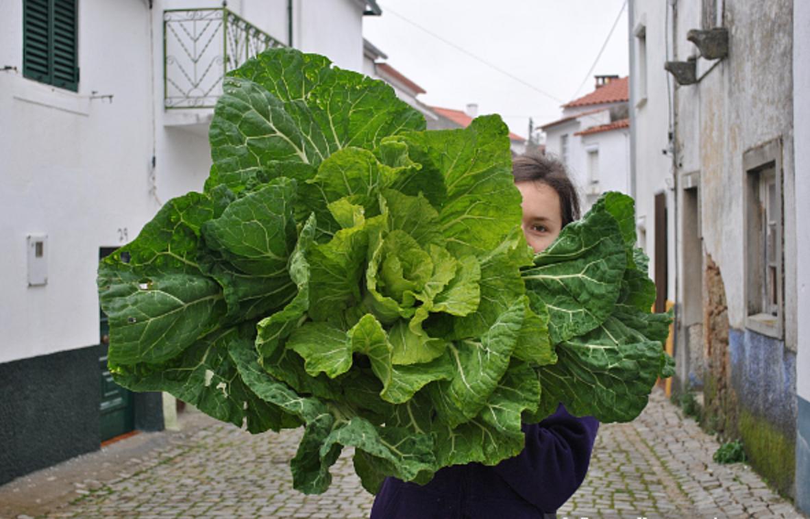 Португальская капуста