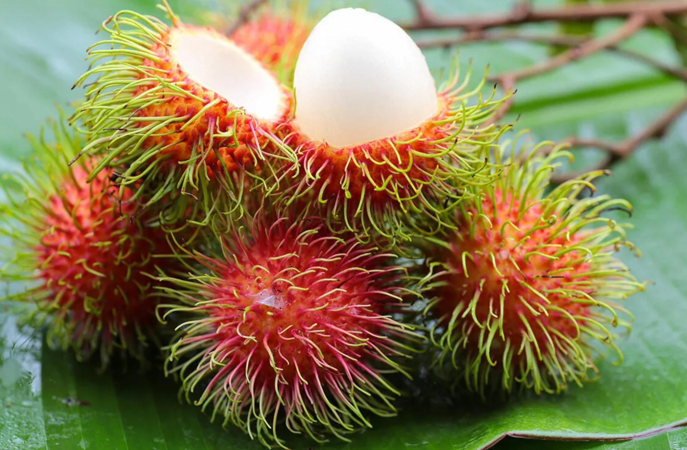 фрукты малайзии фото нужно
