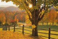 Dawn-Tie A Yellow Ribbon Round The Old Oak Tree.jpg