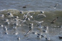 IMG_8720 sea gulls and waves.jpg