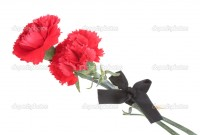 depositphotos_10139753-carnations-and-black-ribbon-isolated-on-white