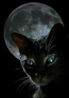 02875d67409358ec392aab2f270d0669c--moonlight-kitty-cats